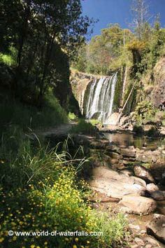 Looking upstream towards the base of Guide Falls from inside its small gorge with some flowers in bloom Blooming Flowers, Tasmania, Waterfalls, Base, Australia, River, World, Outdoor, Outdoors