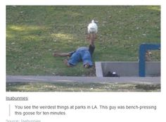 Bench-pressing the goose