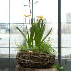 Birds nest planter project