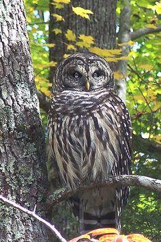 Wildlife - Great Smoky Mountains National Park