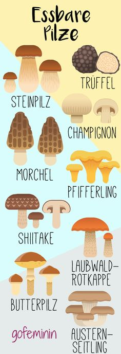 So sehen essbare Pilze aus, die ihr ohne Bedenken sammeln könnt! Für leckere Rezeptideen dazu, klickt einfach auf den Pin!