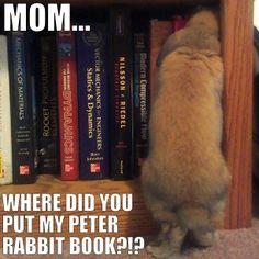 Book bunny