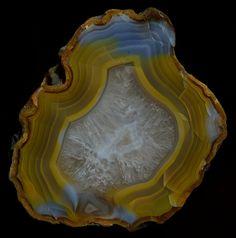 Queensland Agate (Agate Creek, Queensland, Australia)