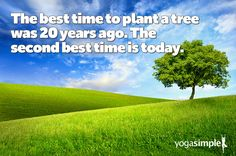 It's not just about trees. :) Even if you feel like you missed an opportunity, there's no time like the present to take action. #yogasimple