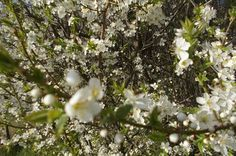 Spring time *- Spring photography* - Nature*---
