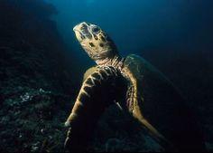 Diving in Daymaniyat Islands