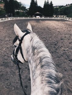 """View from the back of a horse. Pretty dapple grey. ffoxinsox: """"Ocotillo ☁️ """""""