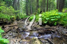 iPHOTOS.com - Stock Photo of a Stream in the Forest #photos #photography #landscape