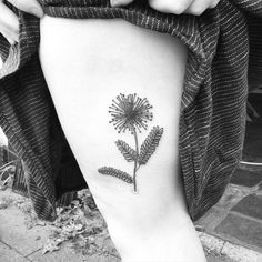 """""""Mimosa pudica ( shy plant ) for beautiful and talented @ashleyronning """""""