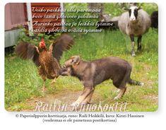 Iki-ihanat maatiaiseläimet lyövät leikkiä kesäpäivänä pihamaalla. Sydämellinen Railin Runokortti tuo iloa kaikenikäisten eläinystävien päivään! Runo muistuttaa yhteisen hauskanpidon ja hyvän mielen yhdessäolon tärkeydestä. Railin Runokortti -postikortin kuvassa on horniolaisen maatiaiskanan, lapinporokoiran pennunja kainuunharmasuuhien leikkiä Kolin Kortelahdessa. Avainlippu-tuote, tehty Suomessa. Runo: Raili Heikkilä, kuva: Kirsti Hassinen Animals, Collection, Animales, Animaux, Animal, Animais