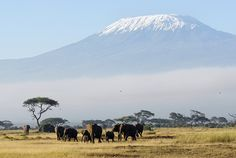 to the plains under Mt. Kilimanjaro, Tanzania, drink lots of wine, and read Hemingway!