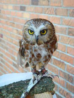 baby owl by Designdivala on DeviantArt Owl Illustration, Owl Pictures, Beautiful Owl, Baby Owls, Stock Art, Cute Owl, Bird Feathers, True Love, Woodland