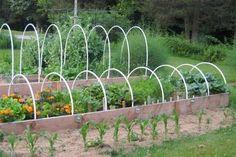 I 10 ortaggi più facili da coltivare nell'orto di casa - Fai da Te Mania