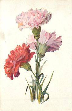 no vase, one red carnation left lower, two pink right and above red