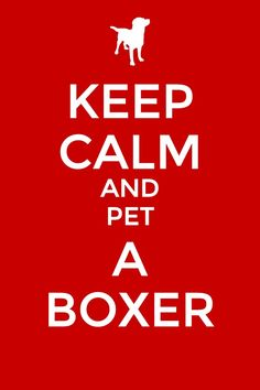 ♥boxers♥On the floor with Baybay and Pinterest