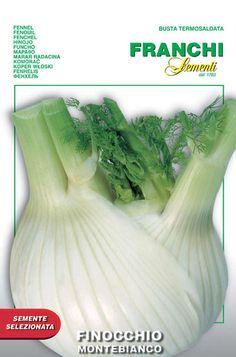 500 Semi//Seeds FINOCCHIO Montebianco