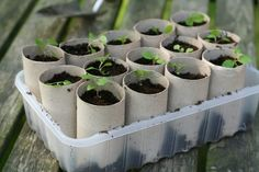 Diy Toilet Paper Rolls To Start Your Plants
