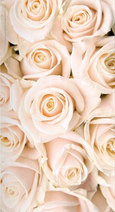 Ana Rosa -This is the color rose I want for our wedding.