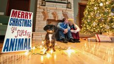 Funny christmas pictures with dog xmas 69 ideas for 2019 Christmas Card Photo Ideas With Dog, Dog Christmas Pictures, Funny Christmas Cards, Christmas Photo Cards, Merry Christmas Ya Filthy Animal, Merry Little Christmas, Christmas Dog, Christmas Humor, Christmas Ideas
