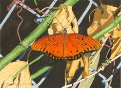 Fritillary Butterfly - 2014 11x15 inch watercolor, gouache and graphite on paper