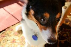 Those eyes Photo by Haley Gallagher -- National Geographic Your Shot Photos Of Eyes, National Geographic Photos, Corgis, Your Shot, Amazing Photography, Shots, Animals, Color, Animales