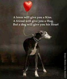 They won't be fake or use you for money (maybe for food tho), if a dog likes you, they will tell you. I Love Dogs, Puppy Love, Cute Dogs, Animals And Pets, Cute Animals, Grey Hound Dog, Dog Rules, Animal Quotes, My Animal