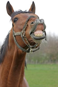 Equine Dental Care is Essential to Horse Health