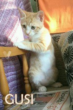 Gusi, gatito de 4 meses en adopción. en Alacant - vibbo - 93308559