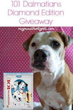 Disney's 101 Dalmatians Diamond Edition Giveaway   Pawsitively Pets