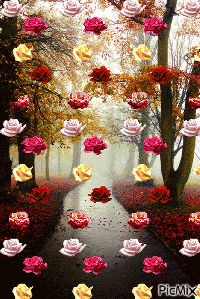 """""""The powerful can kill one, two,hree flowers, but never will hold the sprin. Beautiful Love Pictures, Beautiful Gif, Love Images, Beautiful Flowers Wallpapers, Beautiful Rose Flowers, Love Flowers, Rose Flower Wallpaper, Flowers Gif, Good Morning Gif"""