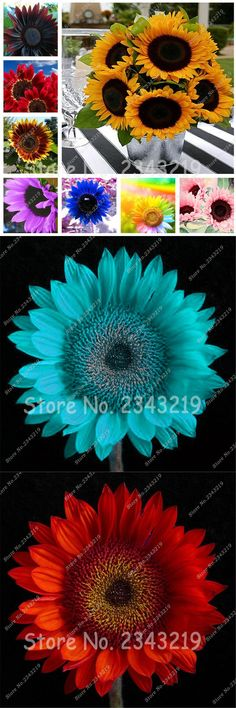 [Visit to Buy] 20 pcs Sunflower Seeds Giant Sun Flower Rare Bonsai Seeds For Home Garden Planting Sunflower Flower Pots Planters #Advertisement