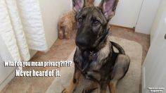 Privacy does not exist with a GSD