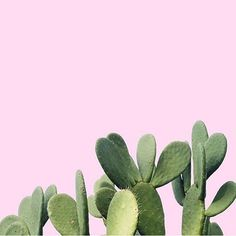 #PlantsOnPink by @mmaddisonn