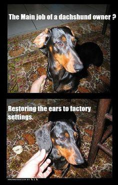 dachshund - lol - so true!