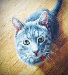 This cat kinda reminds of Bluestar from the Warrior cats series. #warriors #erinhunter