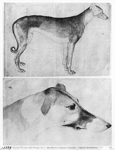 Greyhound and head of a greyhound, from the The Vallardi Album (pen & ink on paper) (b/w photo) by Antonio Pisanello