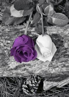 M/M 4 - 'there's a purple one too!' Black White Purple Wall Art/ Rose Flowers/ by LittlePiePhotoArt Purple Love, All Things Purple, Purple Rain, Shades Of Purple, Purple Stuff, Purple Wall Art, Purple Walls, Splash Photography, Black And White Photography