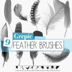 9 highres, high quality photoshop brushes of beautiful feathers. Excellent to be used with any color in any project like card making, wedding invitations,