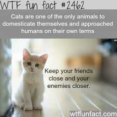 """Cat's actually choose their """"Owners"""" ...all cat lover's know this! -WTF funfacts"""