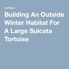 Building An Outside Winter Habitat For A Large Sulcata Tortoise