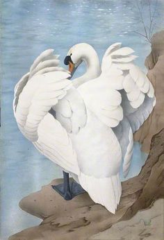 Cob by Charles Frederick Tunnicliffe (1901-1979)