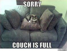 Sorry, aber die Couch ist schon besetzt | Lustige Bilder, Sprüche, Witze, echt lustig