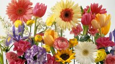 Flower Free Spring Wallpaper | spring wallpapers hd desktop background free flowers spring wallpapers ...