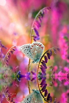 DREAM … – Photography by Mustafa Öztürk - Beautiful Flowers Beautiful Bugs, Beautiful Butterflies, Amazing Nature, Beautiful World, Beautiful Flowers, Simply Beautiful, Beautiful Things, Beautiful Pictures, Beautiful Creatures