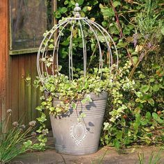 make your own ivy topiary - Google Search