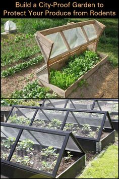 Protect Your Produce from Rodents by Building This City-Proof Raised Garden Bed #organicgardening