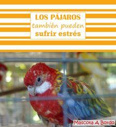 El estrés en los pájaros es muy habitual. Aquí te damos consejos para que tu compañero emplumado sea más feliz.🐤🐦🐧
