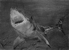 (SOLD) #53 Shark