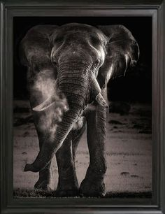 African Elephant, Vintage Black & White Photography