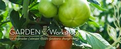 """Dust off your """"green thumb"""" and check out the Garden Workshop hosted once a month at Pavilion Park."""